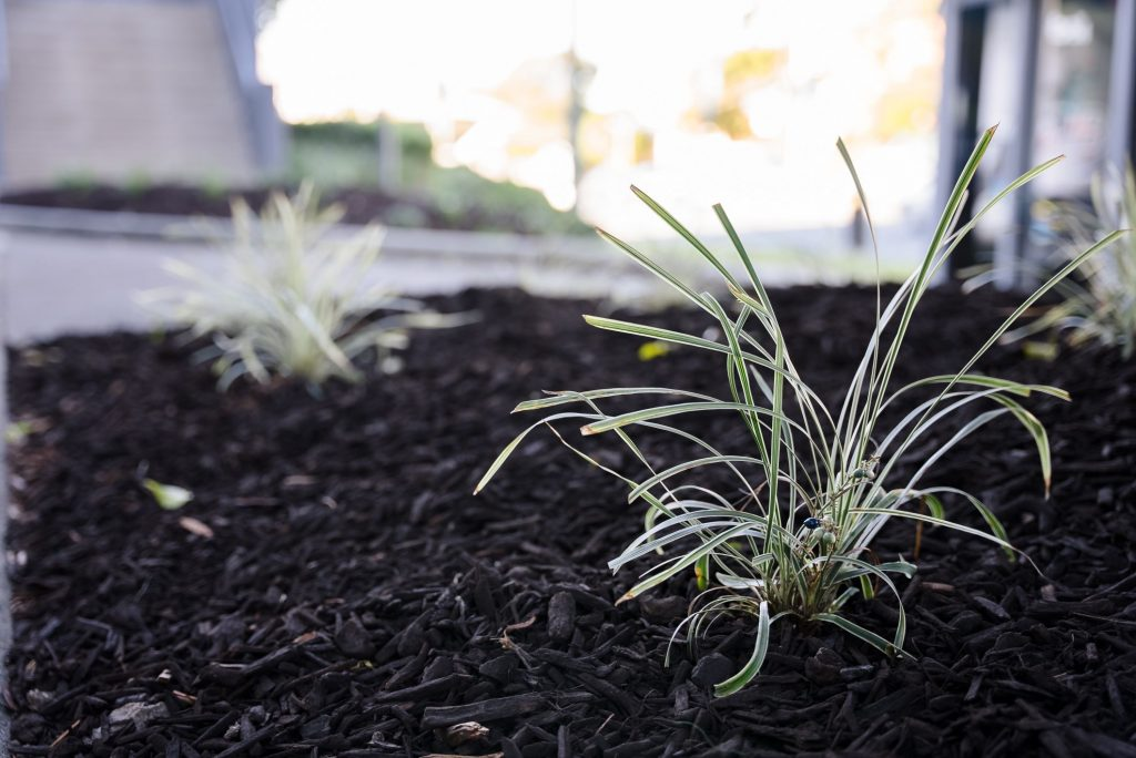 Applying Mulch: The Ultimate Guide